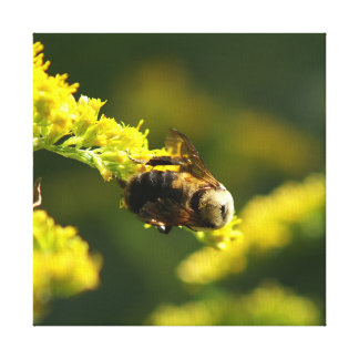 Bumble a abelha, cópia das canvas