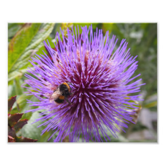 Bumble a abelha em uma flor do cardo impressão de foto