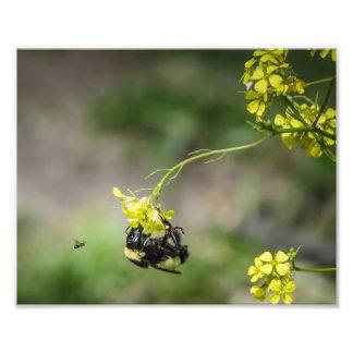 Bumble a abelha foto