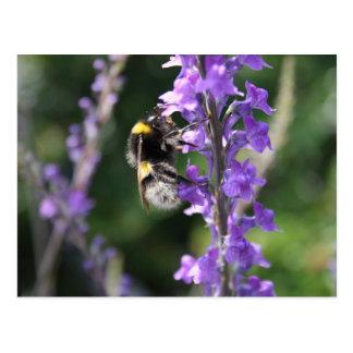 Bumble a abelha que recolhe o cartão do pólen