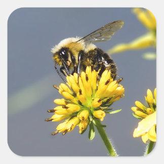 Bumble a etiqueta da abelha