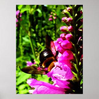 Bumbum da abelha pôster