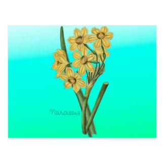Buquê amarelo do vintage do narciso das flores cartão postal