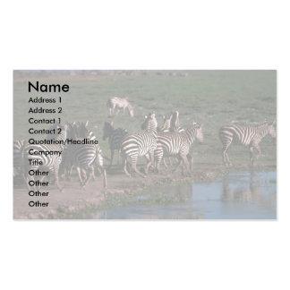 Burchell/zebra de Grant - reuna o carimbo longe de Modelos Cartoes De Visita