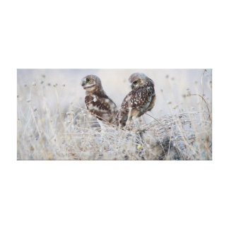 Burrowing canvas de arte do casal da coruja