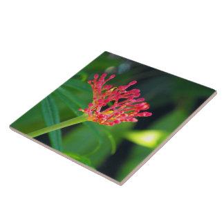 Bush coral na flor
