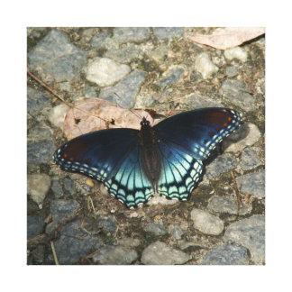 Buterfly, cópia das canvas