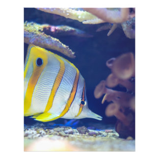 Butterflyfish de Copperband Panfleto Personalizados
