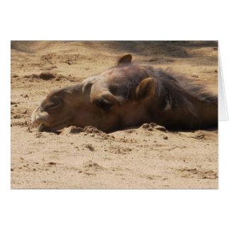 Cabeça do camelo cartão comemorativo