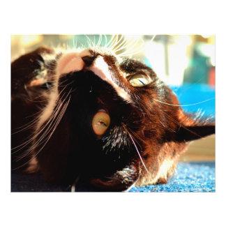 cabeça do gato na imagem felino animal pura da luz panfletos coloridos