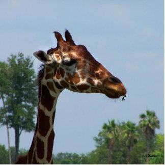 Cabeça do girafa contra a imagem da fotografia do  esculturafotos