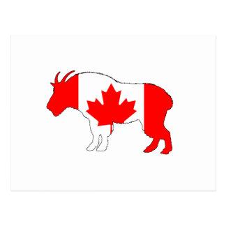 Cabra Canadá Cartão Postal
