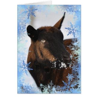 Cabra com um cartão nevado do Xmas do nariz