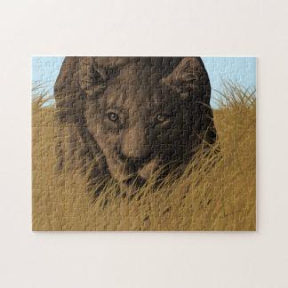 Caça da leoa no quebra-cabeça da grama