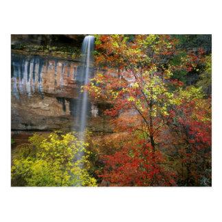 Cachoeira, bordo Acer do bigtooth Cartão Postal