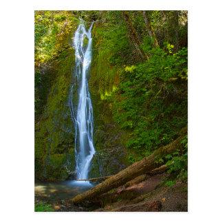 Cachoeira do cartão na floresta