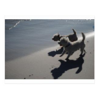 cachorro cartão postal