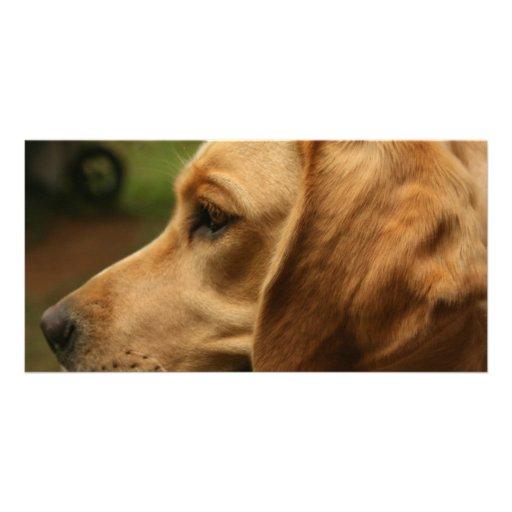Cachorro quente com chili cartão com fotos