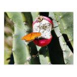 Cacto das borboletas da borboleta cartoes postais