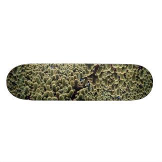 Cacto original de Noto Skateboard