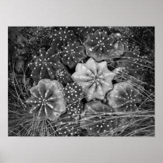 Cacto preto e branco da fotografia poster