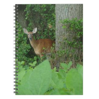 Caderno 100_3076.JPG fotografou cervos de whitetail no