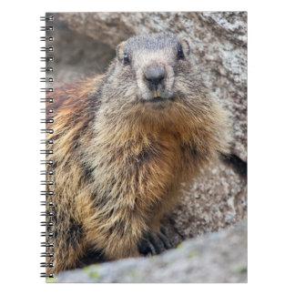 Caderno alpino da marmota