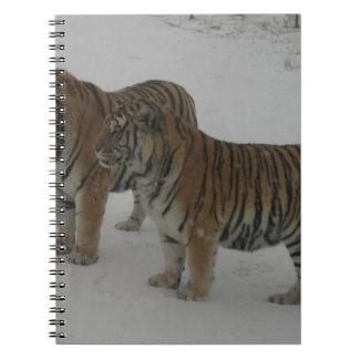 Caderno Alugueres dois tigres Siberian