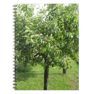 Caderno Árvore de pera com folhas do verde e frutas