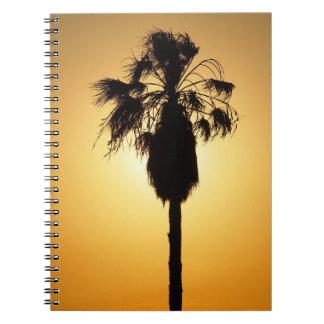 Caderno australiano da silhueta da palma de fã