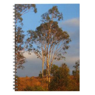 Caderno australiano das árvores de goma