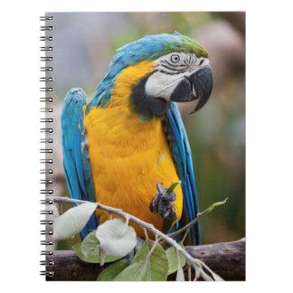 Caderno azul e amarelo do Macaw