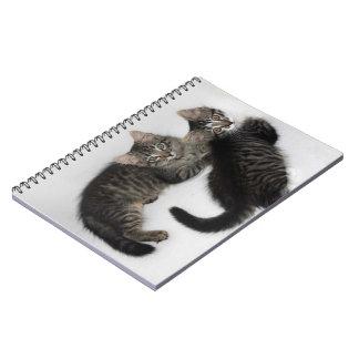 Caderno bonito de dois gatinhos