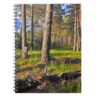 Caderno Bosque de verão no luzir de tarde