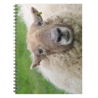 Caderno Carneiros da mãe