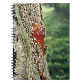 Caderno Close up da excreção da árvore de pera da resina