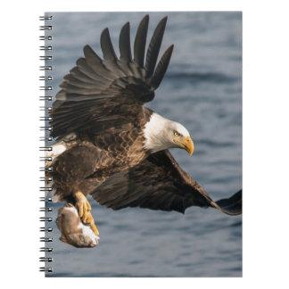 Caderno Comida de travamento da águia americana