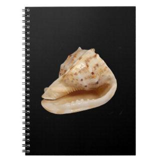 Caderno da foto de Shell do Conch