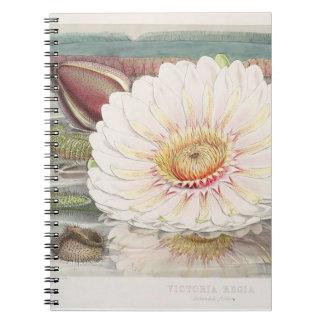 Caderno da ilustração do vintage de Victoria Regia