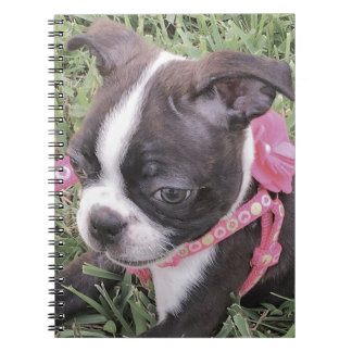 Caderno de Boston Terrier