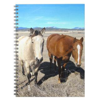 Caderno de dois cavalos