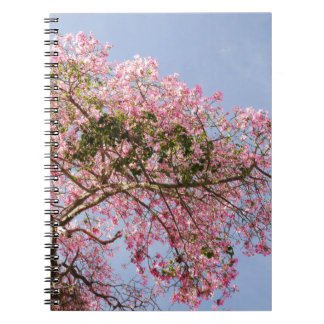 Caderno de seda da flor da árvore de Floss