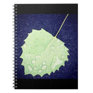 Caderno Dewy da folha
