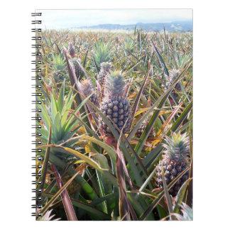 Caderno do campo do abacaxi