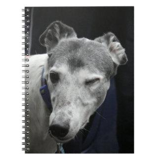 Caderno do galgo (P442)