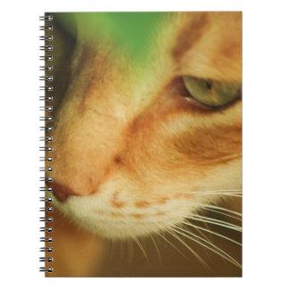 Caderno do gato do gengibre