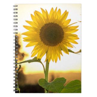 Caderno do girassol