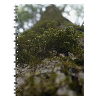 Caderno do musgo