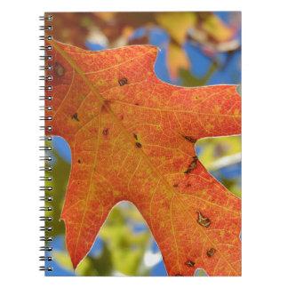 Caderno Do outono da folha fim acima