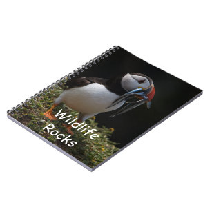 Caderno do papagaio-do-mar atlântico